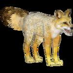 Cape Fox (Tamara Henson)