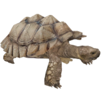 African Spurred Tortoise (Aurora Designs)