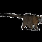 Benett's Tree-kangaroo (Tamara Henson)