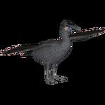 Brandt's Cormorant (Samuel)