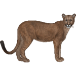 Florida Panther (Aurora Designs)