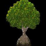 White Mangrove (Worldwide Designers United)