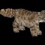 Andean Mountain Cat (Tamara Henson)