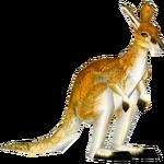 Antilopine Kangaroo (Tamara Henson)/Version 1