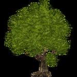 Mango Tree (Worldwide Designers United)
