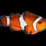 Ambient Clownfish (Zerosvalmont)