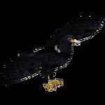African Black Eagle (Bahia46)