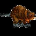 European Beaver (Mad Head)