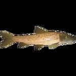 Common Barbel (Ulquiorra)/Version 1