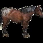 Appaloosa Horse (Tamara Henson)