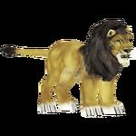 Asiatic Lion (Tamara Henson)/Version 1