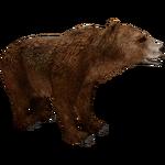 Atlas Bear (Bunyupy & Maximilian)