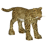 African Leopard (VGnome)
