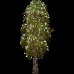 Ulmo Tree (The Restorers)
