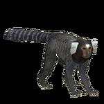Common Marmoset (Ulquiorra)