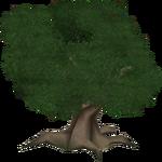 English Oak (Kangorilaphant)