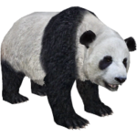 Giant Panda (Aurora Designs)