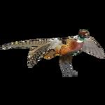 Common Pheasant (Dinosaur & Ulquiorra)