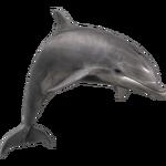 Bottlenose Dolphin (Aurora Designs)