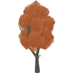 Japanese Maples (Worldwide Designers United)