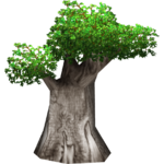 Madagascar Baobab (Colonel Swampert)