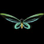 Ambient Queen Alexandra's Birdwing (Whalebite)