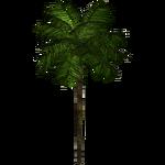 Areca Palm (Fauna)