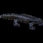 Alpine Salamander (Bunteriro)