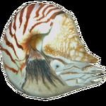 Ambient Nautilus (Zerosvalmont)