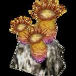 Anemone (HENDRIX)