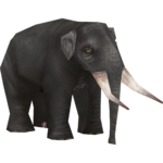 Asian Straight-tusked Elephant (Mjmannella)