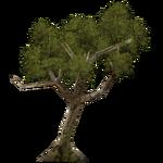 Shepherd's Tree (Demon Hunter)