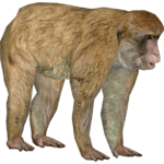 Barbary Macaque (DutchDesigns)