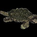 Alligator Snapping Turtle (Hispa Designs)