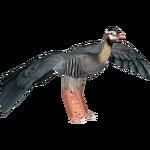 Arabian Partridge (Artifex)