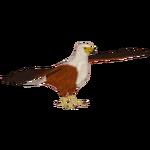 African Fish Eagle (Crookedjaw)