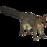Common Brushtail Possum (Bohemian Rhapsody)