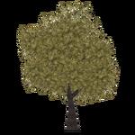 Jarrah Tree (Tamara Henson)