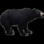 American Black Bear (Havok1199)
