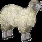 Ambient Sheep (Penguinman)