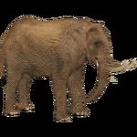 African Desert Elephant (Tamara Henson)