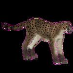 American Cheetah (Dinosaur & Tamara Henson)