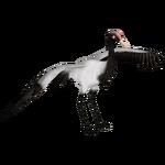Black Necked Crane (Zoo Tycooner FR)