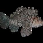 Common Lionfish (Dycki1231)