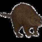 European Beaver (Cougarfan12)