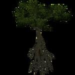 Black Mangrove (Demon Hunter)