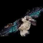 Blue-winged Kookaburra (ZTABC Team)