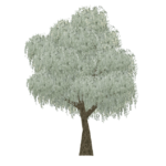 Coolabah Tree (Tamara Henson)