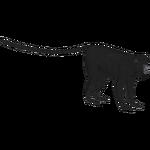 Black Howler Monkey (Bunteriro)