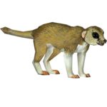 Fat-tailed Dunnart (Tamara Henson)/Version 1